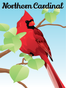 Matt Thayer - Cardinal Illustration